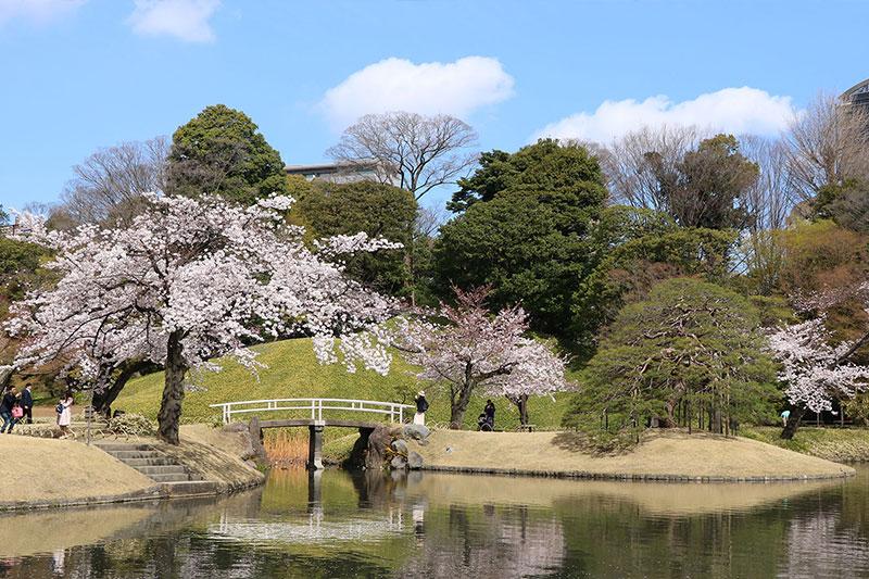 your-japan-journey-koishikawa