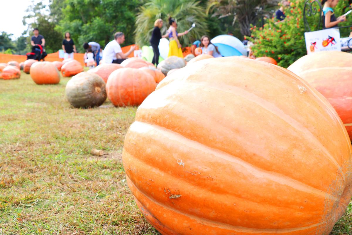 Yumenoshima-2017-Halloween-Pumpkin-Month