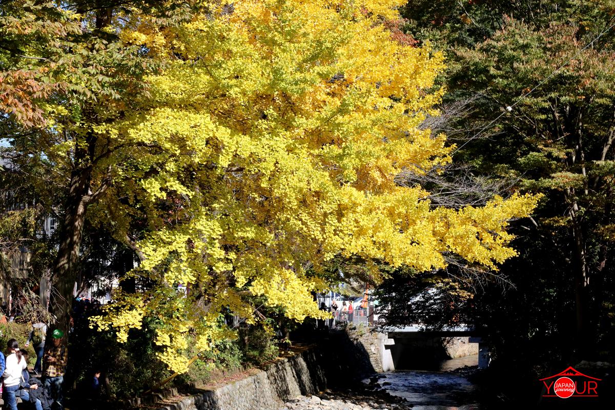 gingko mount takao shrine
