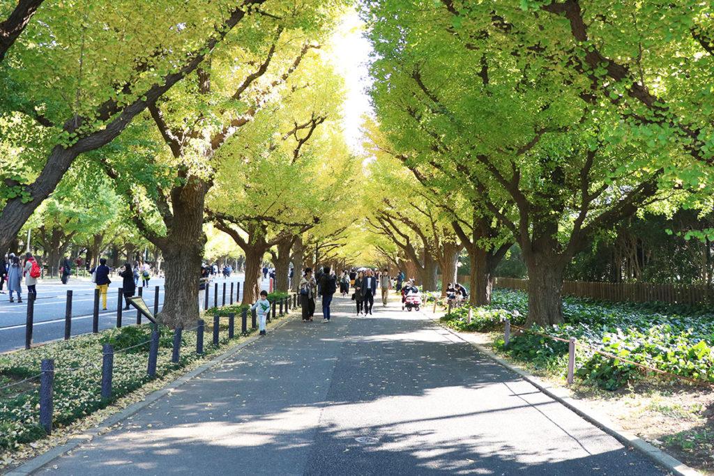 Ginkgo Avenue, Meiji Jingu Gaien Park