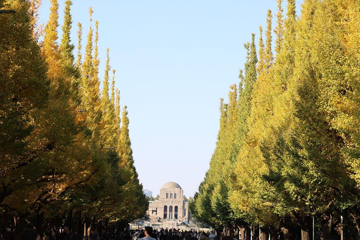Best Autumn Spots in Tokyo - Ginkgo Avenue, Meiji Jingu Gaien Park