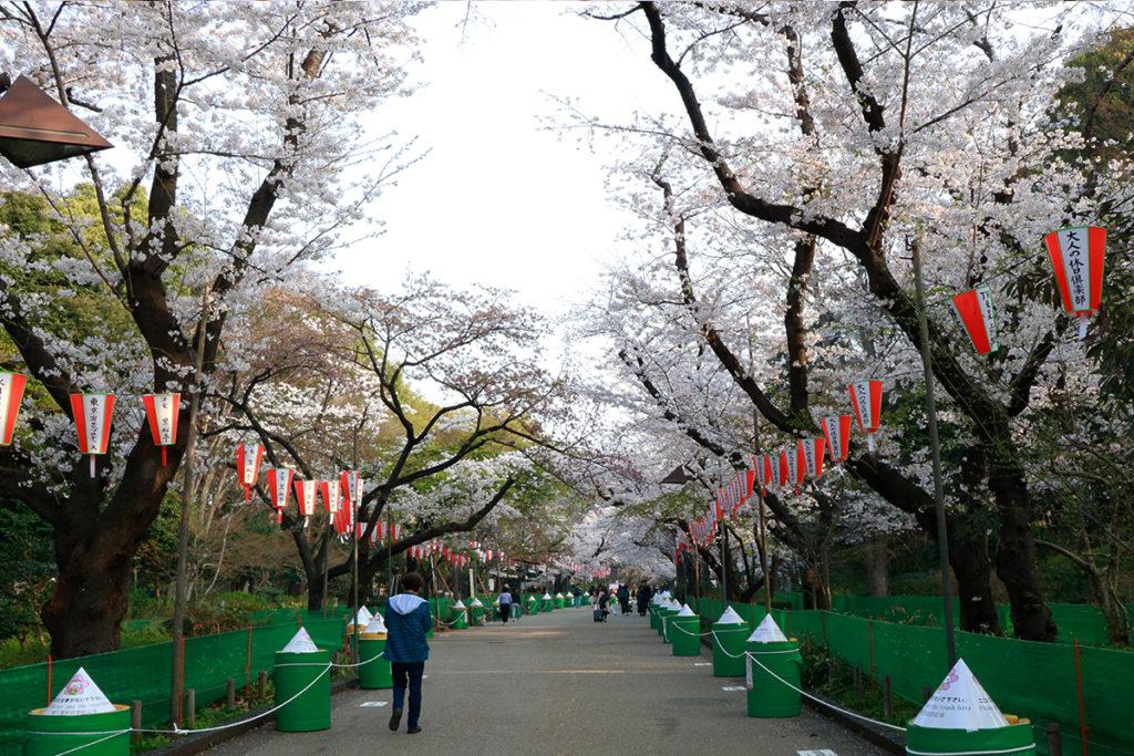 spring-2018-ueno-park-1