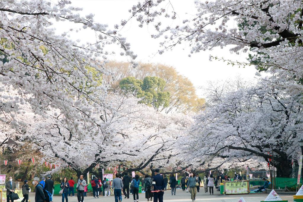spring-2018-ueno-park-6