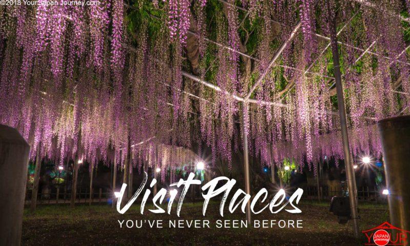 Wisteria Tree Japan-Real life Avatar Tree of Souls