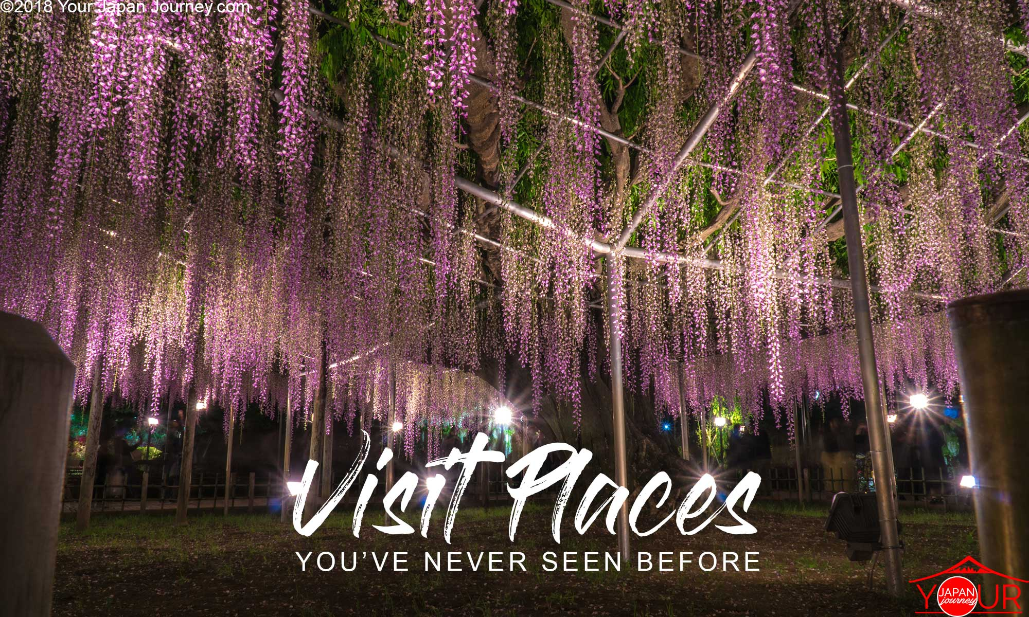 Wisteria Tree Japan-Real life Avatar Tree of Souls