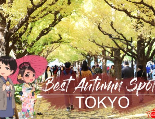 Best Autumn Spots in Tokyo