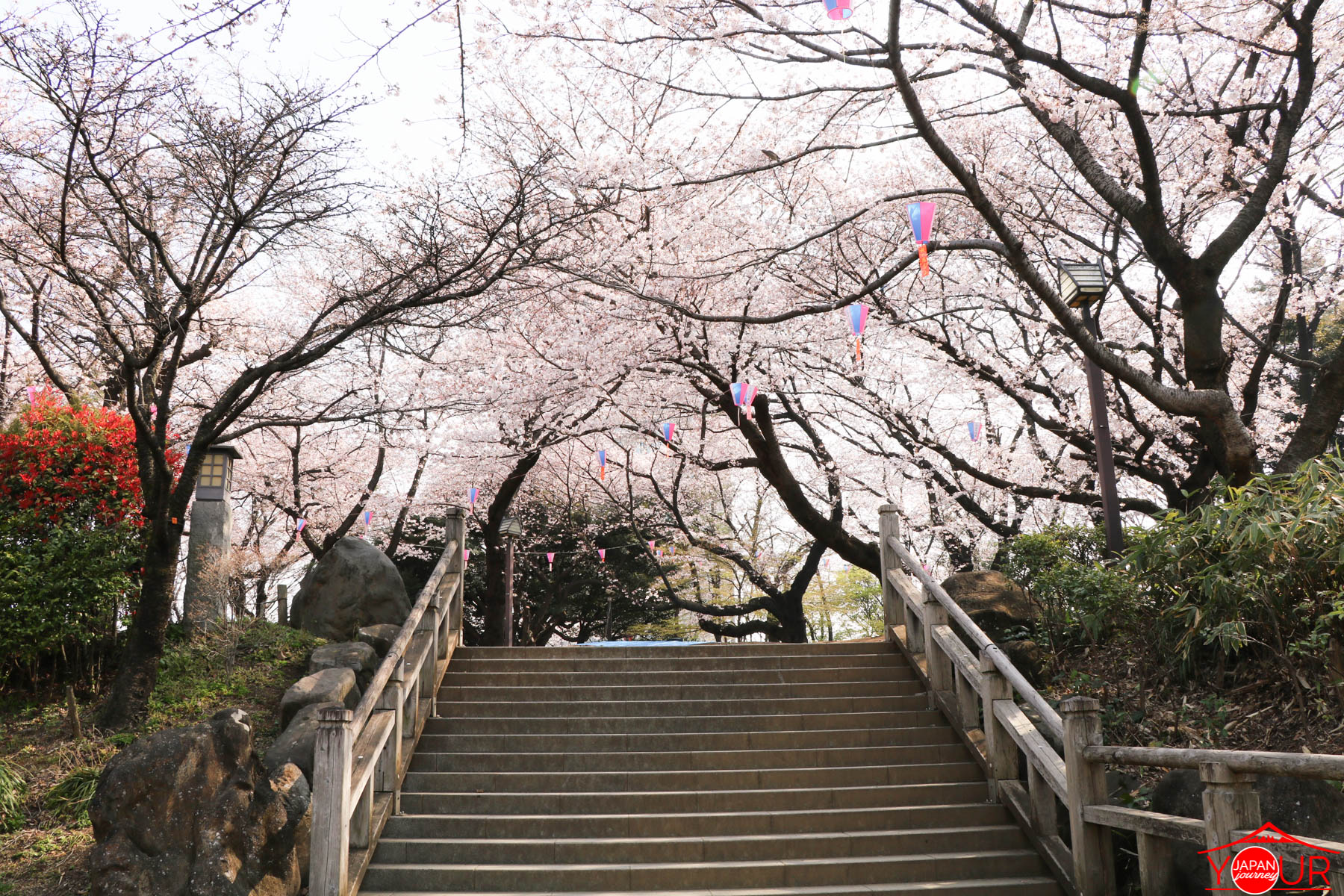 Japan Cherry Blossom Forecast 2019 - Asukayama Park