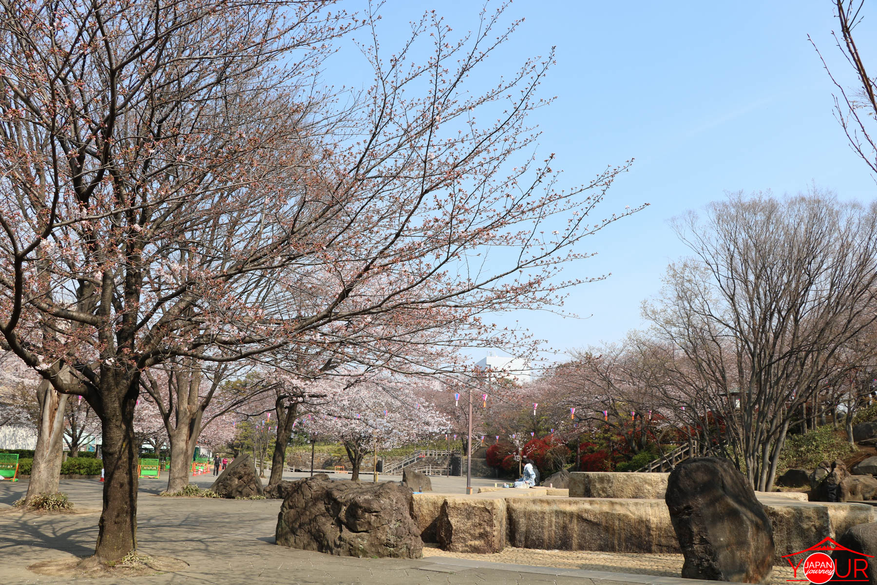 Japan Cherry Blossom Forecast 2021 - Asukayama Park