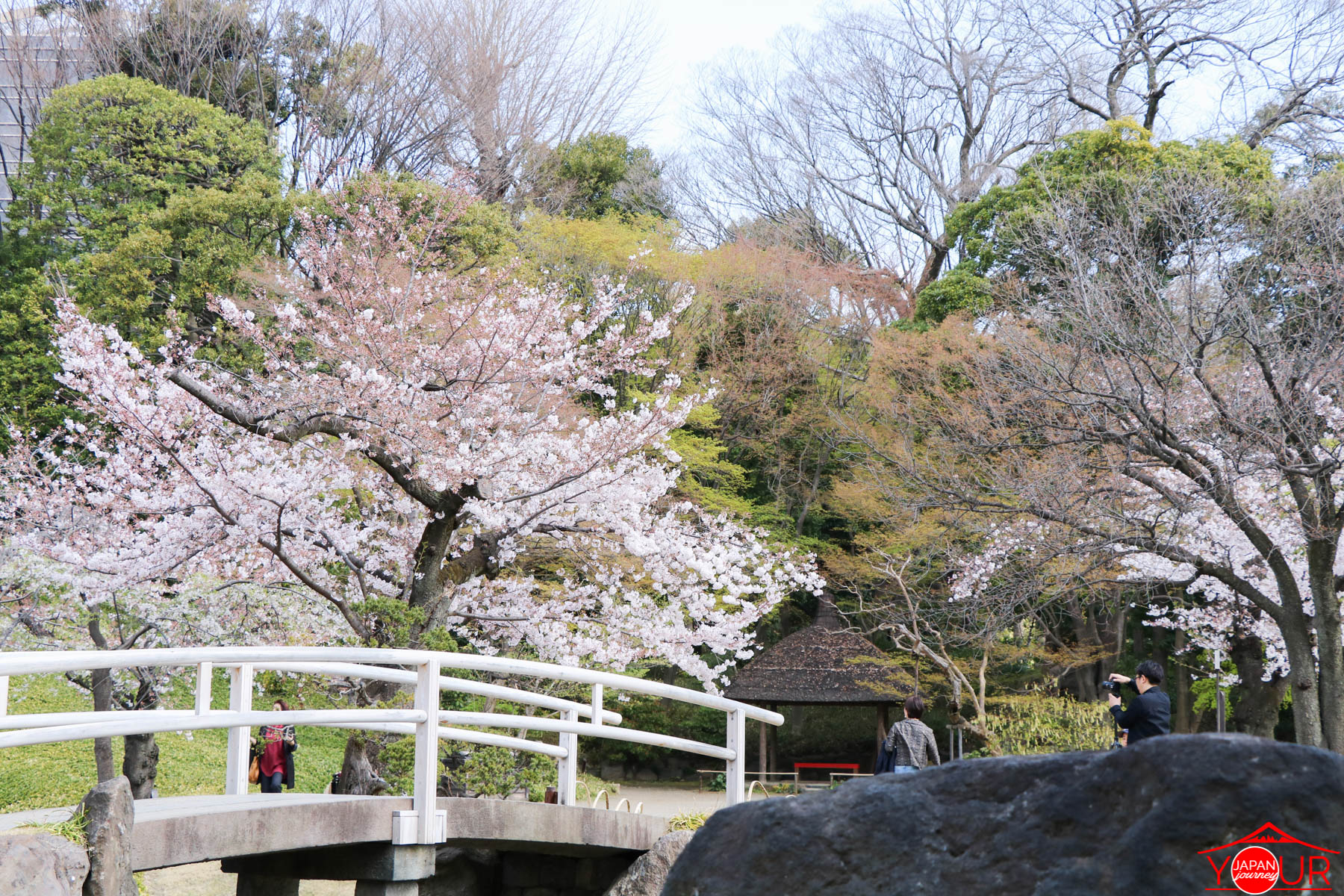 Japan Cherry Blossom Forecast 2021 - Koishikawa Korakuen Park