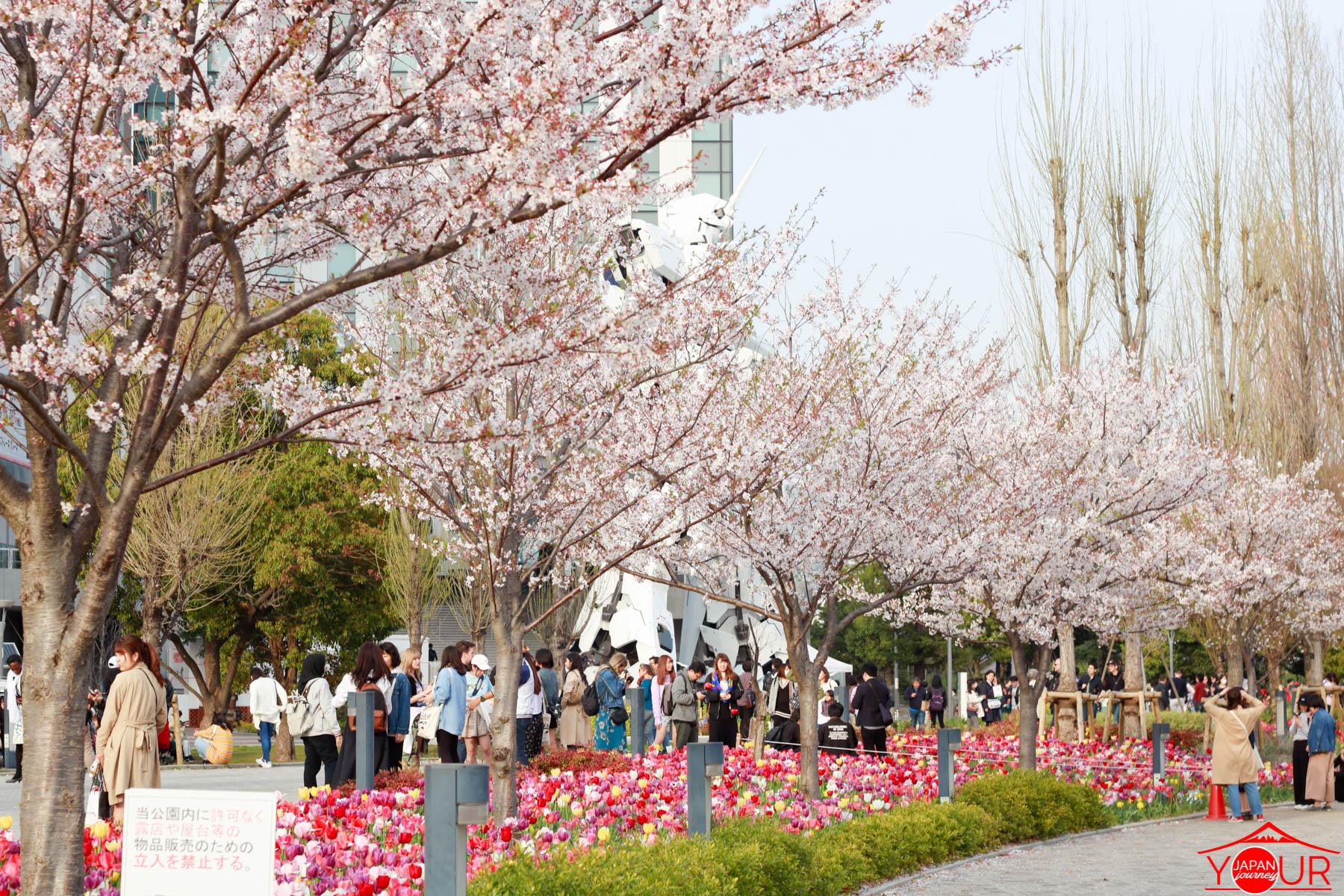 Japan Cherry Blossom Forecast 2019 - Gundam Unicorn Odaiba