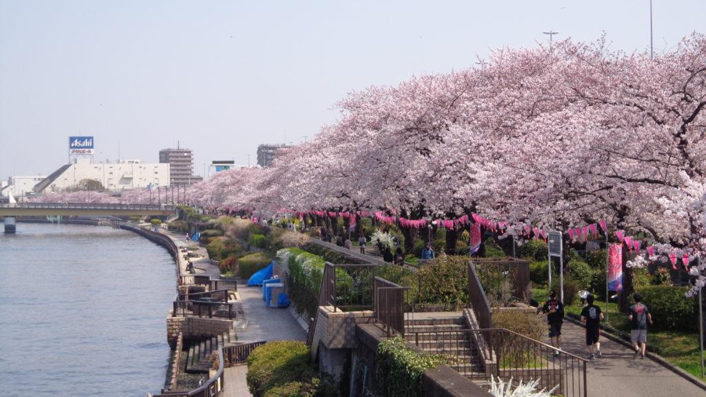 Cherry Blossom Forecast 2019 - Sumida Park