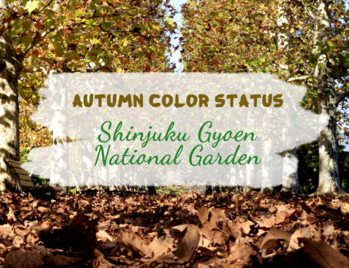 Autumn Color Status: Shinjuku Gyoen National Garden