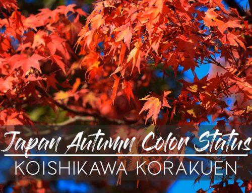 Japan Autumn Color Status – Koishikawa Korakuen