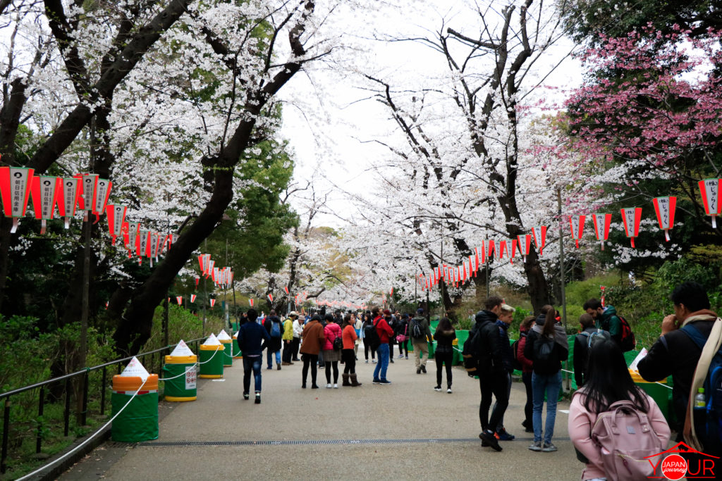 Cherry-Blossom-2019-Ueno-and-Koishikawa-Korakuen
