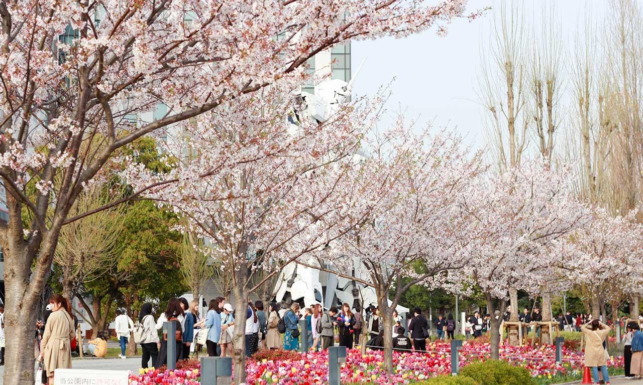 Your Japan Journey Sakura 02
