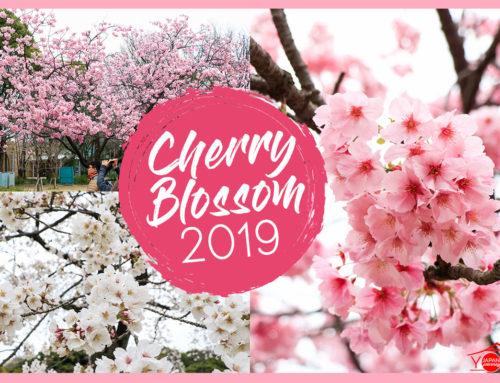 Cherry Blossom 2019 Ueno Park – Koishikawa Korakuen
