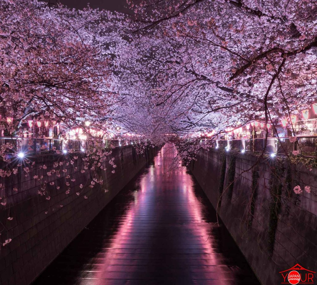 Instagrammable Spots in Tokyo - Naka Meguro River - Cherry Blossom